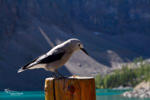 Banff IMG_9751-Edit