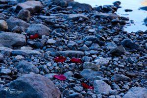 Banff IMG_9813-Edit