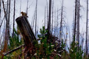 Banff IMG_9900-Edit