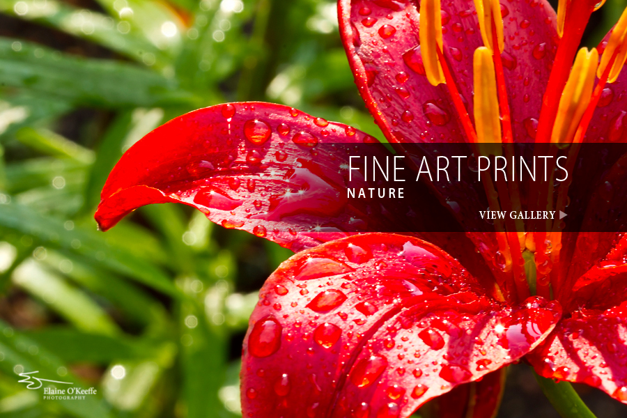 Elaine O'Keeffe Photography